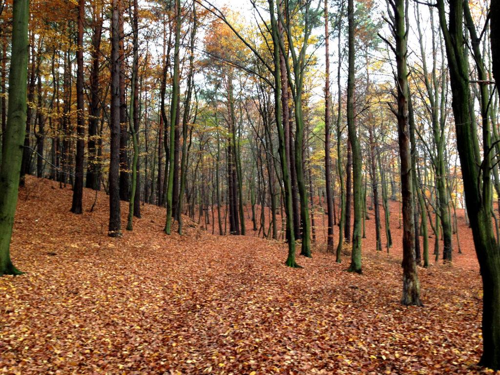 Śliczna jesień. Źródło: własne.
