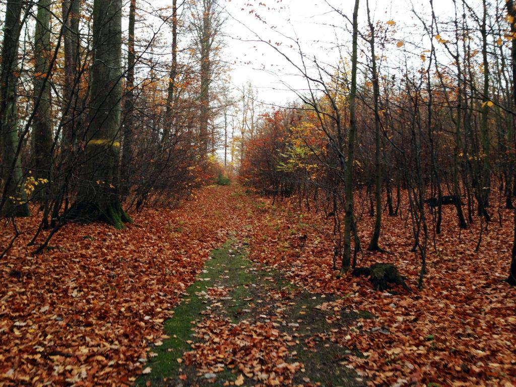 Do góry, przez las, przed siebie :) Źródło: własne.